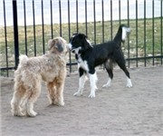 Photo of Fuller Park Dogpark - Denver, CO