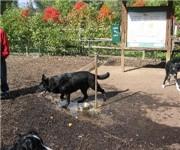 Photo of Banneker Dog Park - Arlington, VA