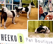 Photo of Cheeko B Pet Boutique - San Francisco, CA