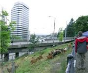 Photo of Plymouth Pillars Dog Park - Seattle, WA
