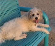 Photo of Chaparral Dog Park - Scottsdale, AZ