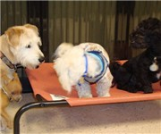 Photo of South Park Doggie Daycare Spa - Los Angeles, CA