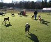 Photo of The Wagging Tail Doggie Day Care - New York, NY