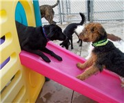 Photo of Central Bark Doggy Day Care - Chicago, IL
