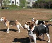 Photo of Chester Avenue Dog Park - Philadelphia, PA