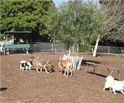 Westminster Dog Park - Los Angeles, CA 02073287787