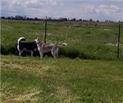 Photo of Tanzanite Community Dog Park - Sacramento, CA