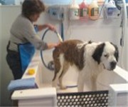 Woody's Self Serve Dog Wash & Boutique - Pittsburgh, PA (412) 714-4644