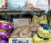 Photo of The Pet Cabaret - Roslindale,, MA