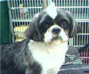 Photo of Hairy Situations Dog Grooming - Alexandria, VA