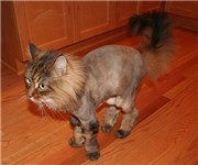 Photo of Kristi's Grooming Company - Seattle, WA