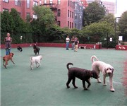 Photo of Carleton Court Dog Park - Boston, MA