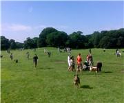 Photo of Corey Hill Park Off Leash Dog Park - Brookline, MA