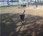 Photo of Cooper Park Dog Run - New York, NY