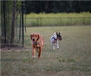 Photo of Otto Armleder Dog Park - Cincinnati, OH