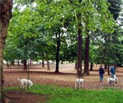 Photo of Normandale Dog Park - Portland, OR